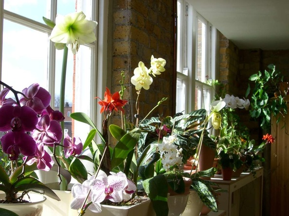 Like phoenix from the compost heap - the resurgence of indoor plants