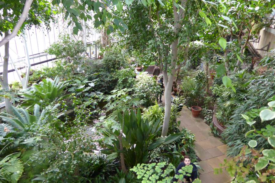 Three Conservatories In London Part I The Barbican Plants
